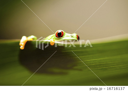 Frog shadow on the leaf on colorful background