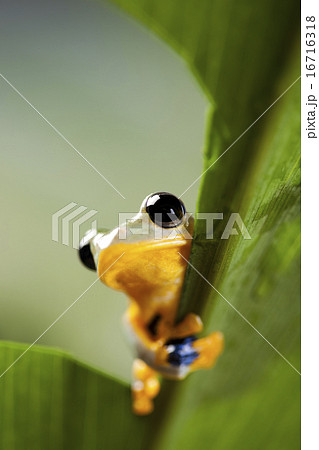 Green tree frog on colorful background