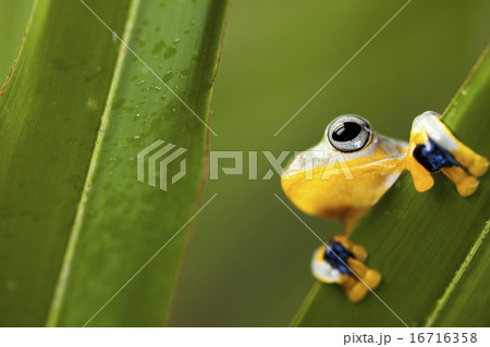Frog on the leaf on colorful background