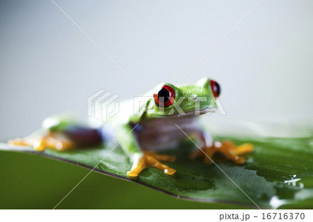 Tree frog on colorful background
