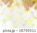 紅葉と淡い陽光 16730311