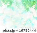 青もみじと淡い陽光 16730444