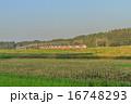 秋の佐倉市の田園風景 16748293