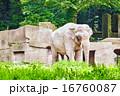 Big Elephant. 16760087