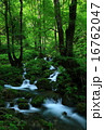 森の中の沢 16762047
