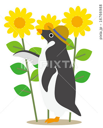 アデリーペンギン ひまわり畑 16766988