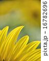花弁 花 植物の写真 16782696