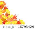 秋の葉 白背景 16793429