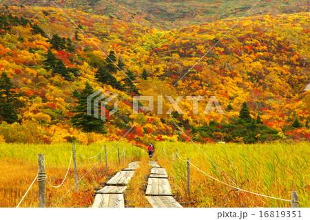 栗駒山 16819351