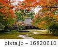 奈良の名園吉城園・紅葉の最盛期(無人) 16820610