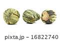 花 お茶 グリーンの写真 16822740