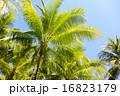 椰子 自然風景 ヤシの木の写真 16823179