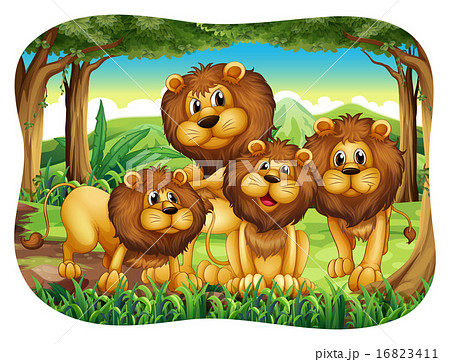 Lions 16823411