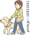 盲導犬と歩く男性 16831641