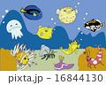 海の生き物たち 16844130