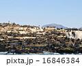 アシカの島 16846384