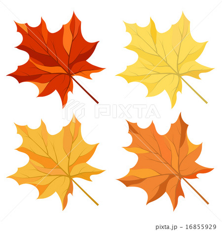 Maple leaves setのイラスト素材 [16855929] - PIXTA
