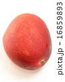 おいしい完熟マンゴー 16859893