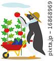 アデリーペンギン 収穫 16868969