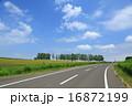 舗装道路 並木 青空の写真 16872199