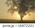 太陽昇るとき 16872201