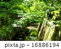 哲学の道 青紅葉 京都の写真 16886194