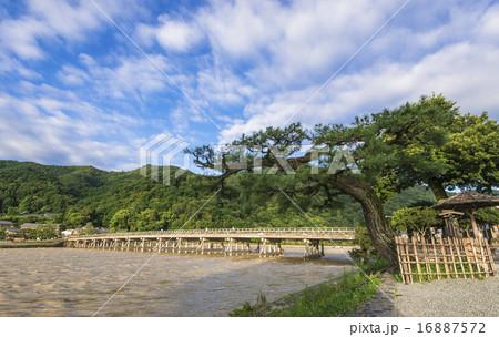 京都 嵐山 渡月橋 16887572