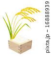 稲穂と米 16888939
