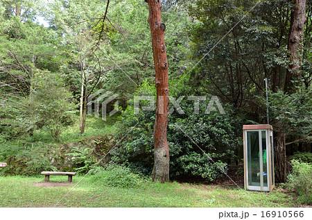 森の中 電話ボックス 16910566