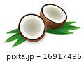 ココナッツ 16917496
