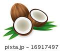 ココナッツ 16917497