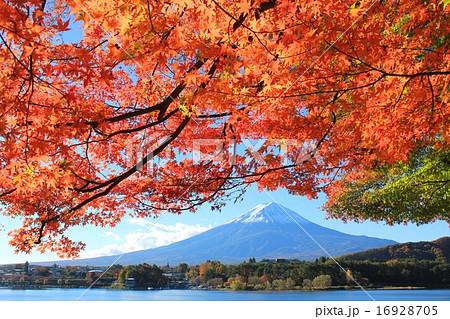 秋を彩る富士の風景 16928705
