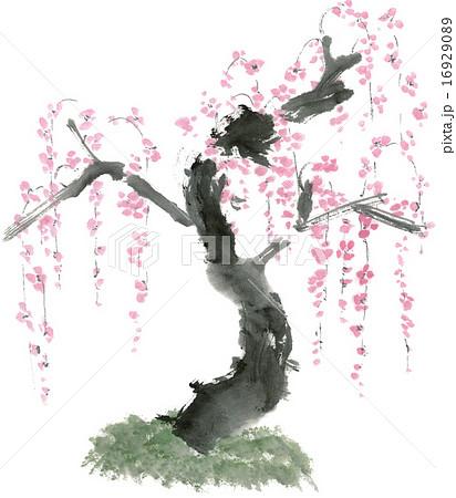 梅 水墨画 のイラスト素材 16929089 Pixta