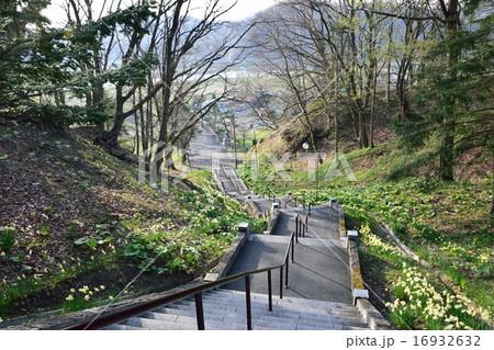 義経公園の桜 16932632