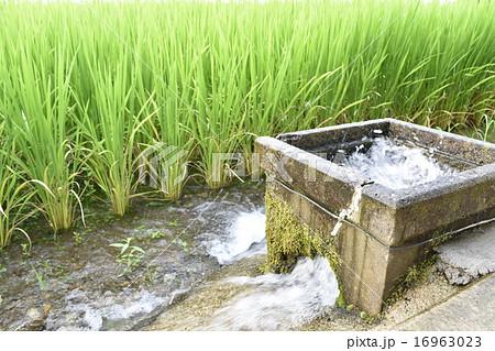 田んぼの水出し 田んぼの水道ポンプ お米の栽培 16963023