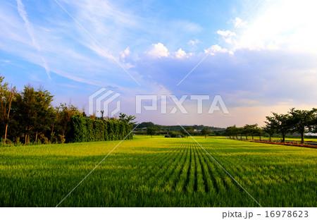 夕方の空と田園 16978623