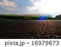 空と稲とコンクリート 16979673
