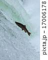 ジャンプ 遡上 川の写真 17006178