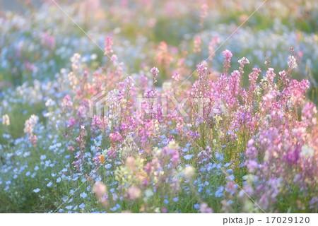 楽園の花園 17029120