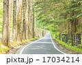 並木道 三笠通り カラマツ並木の写真 17034214