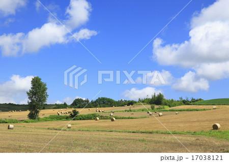 北海道 上富良野町 収穫された麦畑と夏雲 17038121