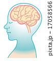 脳 横顔 ベクターのイラスト 17058566