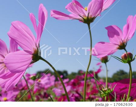 空に向かって咲く花 17062630