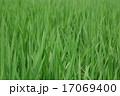 稲 17069400