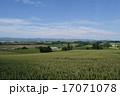 丘 麦畑 小麦の写真 17071078