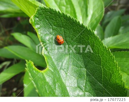 虫の食事 / Bug's Lunch 17077225