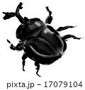 カブトムシ 17079104