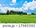 夏の田園風景【長野県・野辺山高原】 17083392