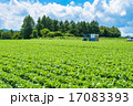 夏の田園風景【長野県・野辺山高原】 17083393