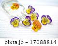 ガラス瓶 ビオラ 瓶の写真 17088814